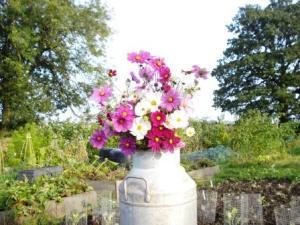 yorkshire petals oct 001